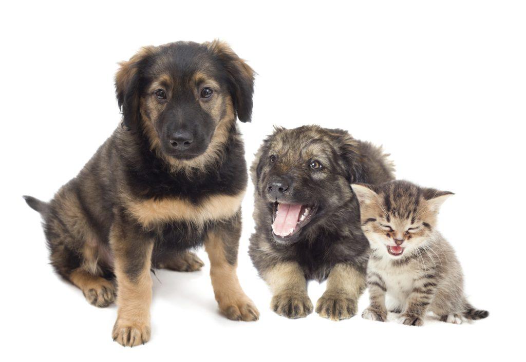 Home - North Florida Animal Rescue