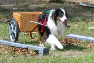 cart-dog
